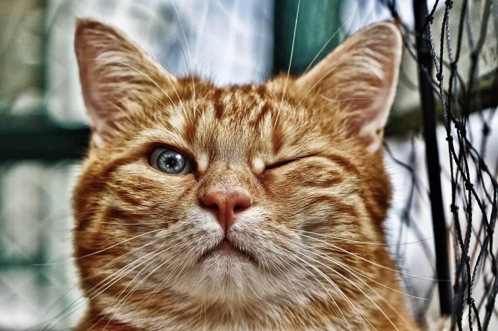 Gambar kucing berkedip